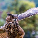 フクロウの飼育で心配される臭いは?