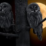 フクロウは夜行性だから夜がうるさい!?