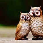 フクロウとコノハズクの鳴き声は違うの?