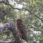 北海道と福岡で生息している絶滅危惧種のフクロウとは