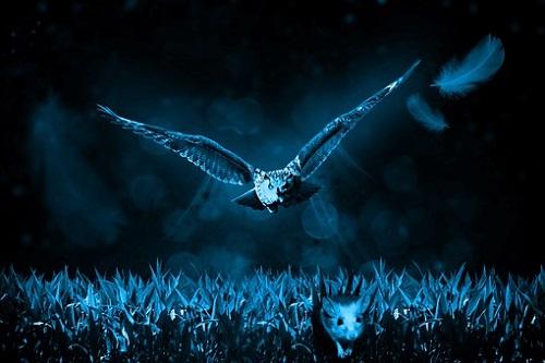 フクロウ 夜行性 理由