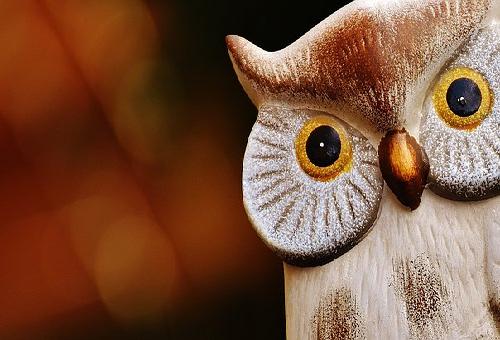 フクロウ カフェ 触れる 栃木