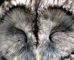 フクロウ 嬉しい時 感情表現