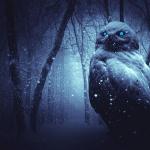 フクロウの目の色が青とは