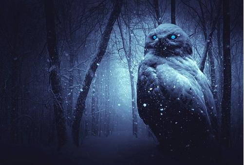 フクロウ 目の色 青