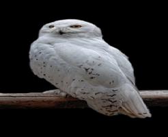 フクロウ 首 角度 360 骨
