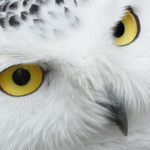 フクロウの目の構造と見え方について