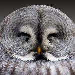 フクロウのあくび?寝る時間と目を閉じるタイミング