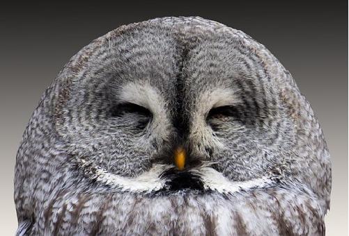 フクロウ あくび 寝る時間 目を閉じる