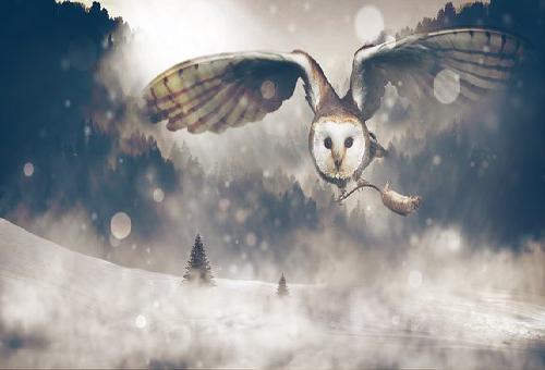 フクロウ 狩り 方法