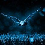 フクロウが夜行性の理由とは?