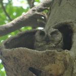フクロウの営巣の時期や場所は?