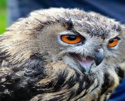 フクロウ 噛み癖 治す