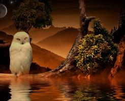 フクロウ 水浴び 水飲み